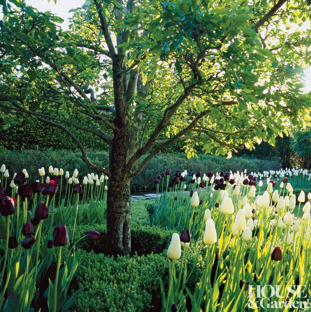 Home On Gardent Ct: Traditional Garden By Oscar And Annette De La Renta By