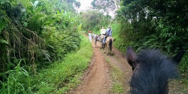We took a private horseback ride through their property with a couple of nature guides and saw our first sloth.