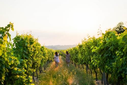 Bordeaux is aiming for 100% sustainability, photo courtesy Vins de Bordeaux