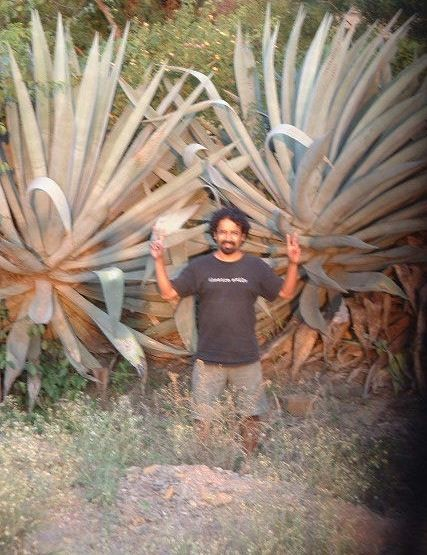 Agave India What S In A Name Tequila Drinkwire