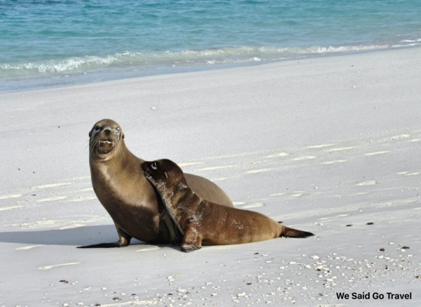 Sea lion and her baby at Gardner bay, Espanola, Galapagos Islands, Photo by Lisa Niver