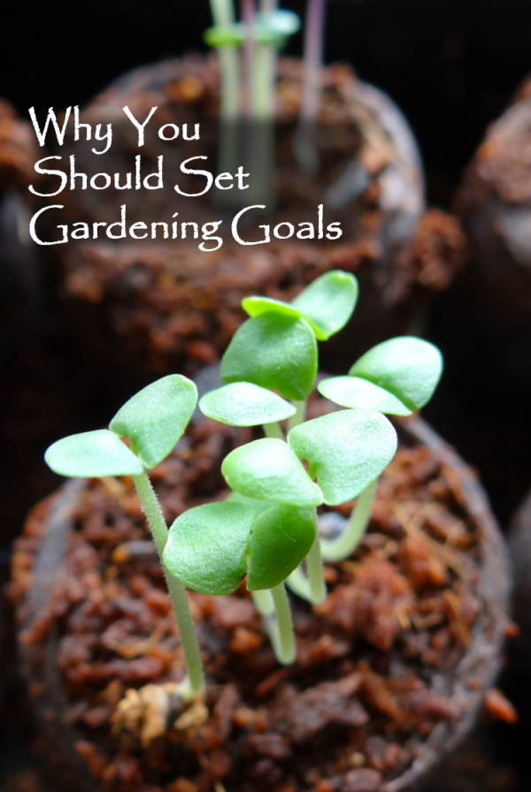 Why You Should Set Vegetable Gardening Goals