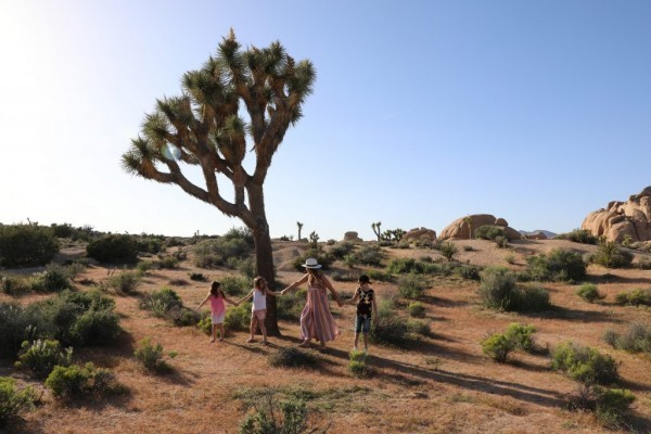 Family Vacation At Joshua Tree | Stroller In The City