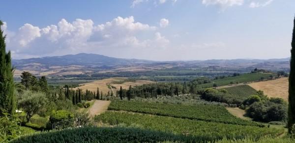 Banfi vineyards, photo by Kelly Magyarics