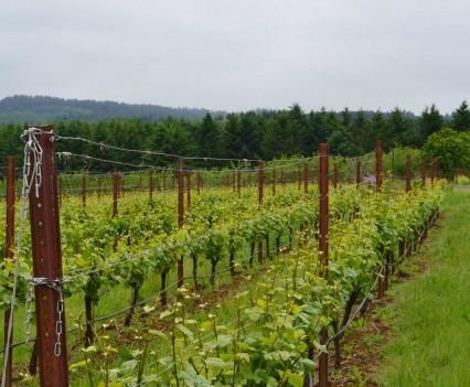 Raptor Ridge Pinot Vineyards