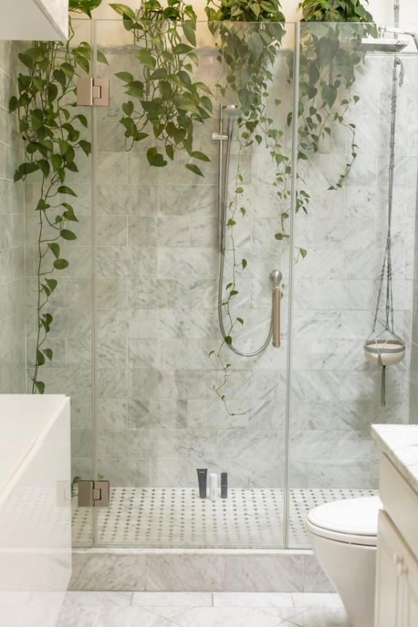 glass shower with plants