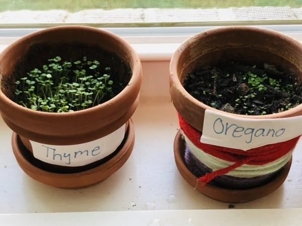 herbs-1024x768.jpg